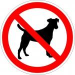 stop_dog